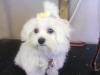 dog-grooming-halstead